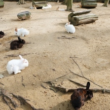 Berjaya Hills: Animal Park